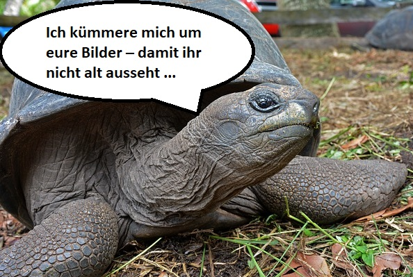 Die ALT-Texte werden perfekt mit der ALTabdra-Riesenschildkröte.