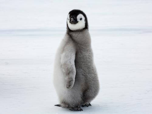 Das Google Penguin Update hat den Linkaufbau verändert.