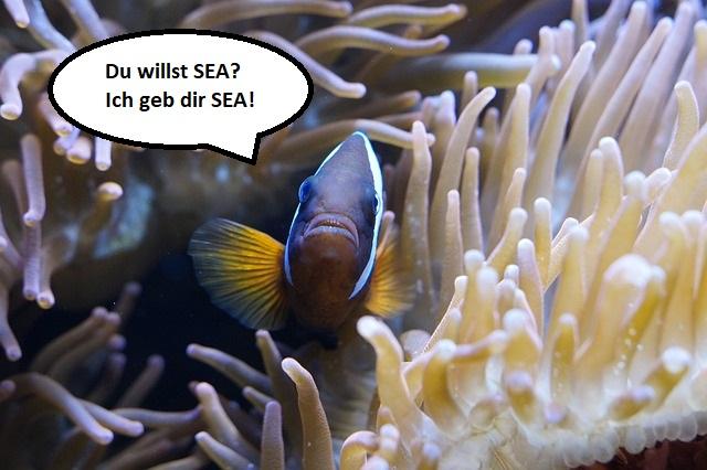 SEA wie die SEAnemone? Wir machen für Sie Suchmaschinenwerbung!
