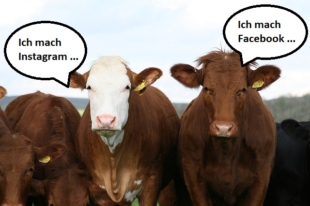 Social Media Marketing betreiben – wie das SMMtaler Rind!